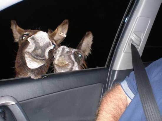 авто и животные