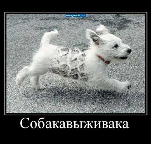 собака - выживака